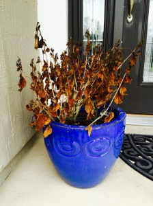 The only things which didn't survived my absence were the front door plants.