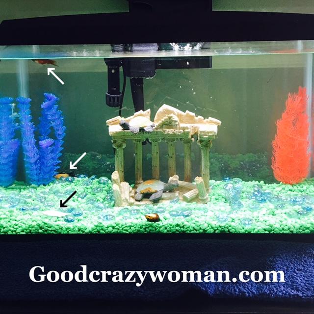 Xiomara Spadafora Fish Killer